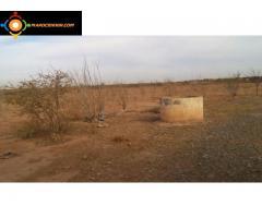 Terrain agricole à vendre à kalaa sraghna