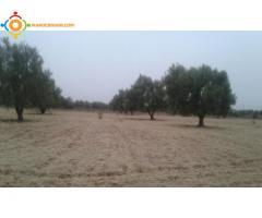 terrain au région d'Essaouira