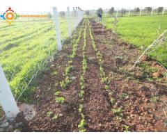 Terrain agricole 1 Ha