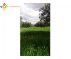 Terrain de 2 hectares à vendre