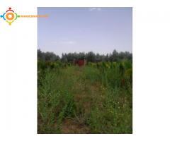 terrain 1200m2 à vendre sur la route d'ourika