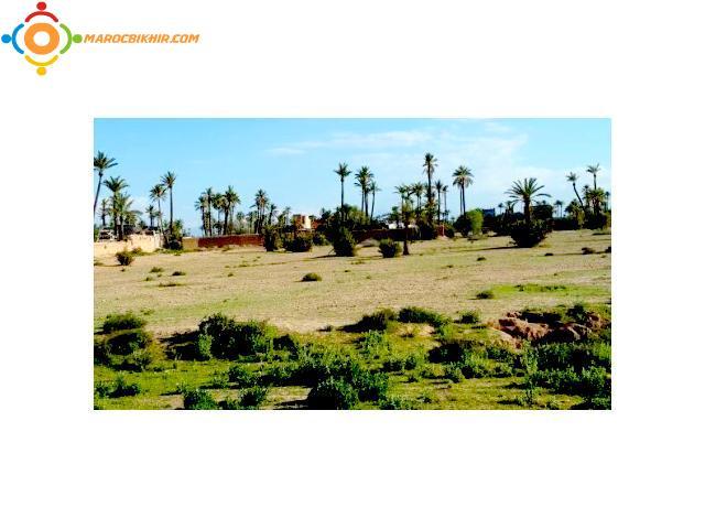 terrain vendre au circuit de la palmeraie clotur 650 dhs m2 bikhir annonce bon coin maroc. Black Bedroom Furniture Sets. Home Design Ideas